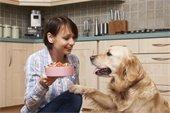 Photo of a woman feeding a dog.