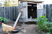 Photo of a backyard chicken coop.