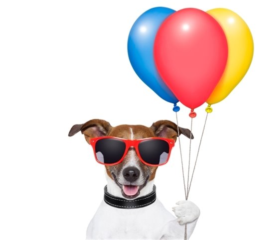 Canine Carnival Dog with Balloons