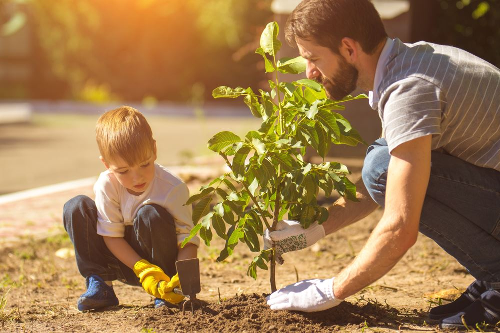 Father and son plant a tree