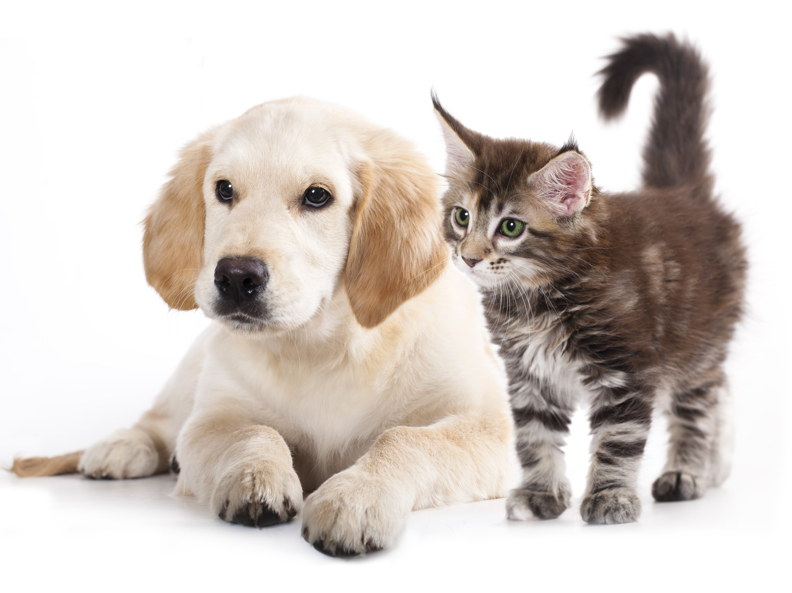 Photo of a puppy and a kitten