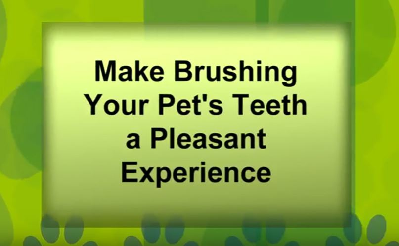 Click here to watch a video about brushing your pet's teeth.