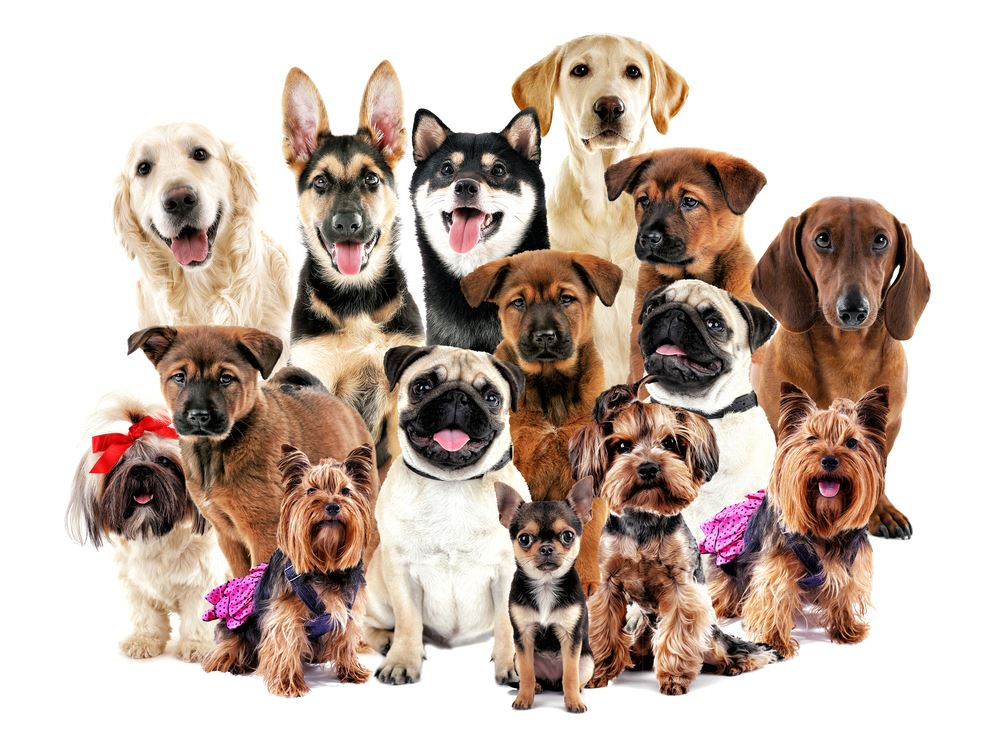 Photo collage of dog breeds, all ages and sizes of dogs