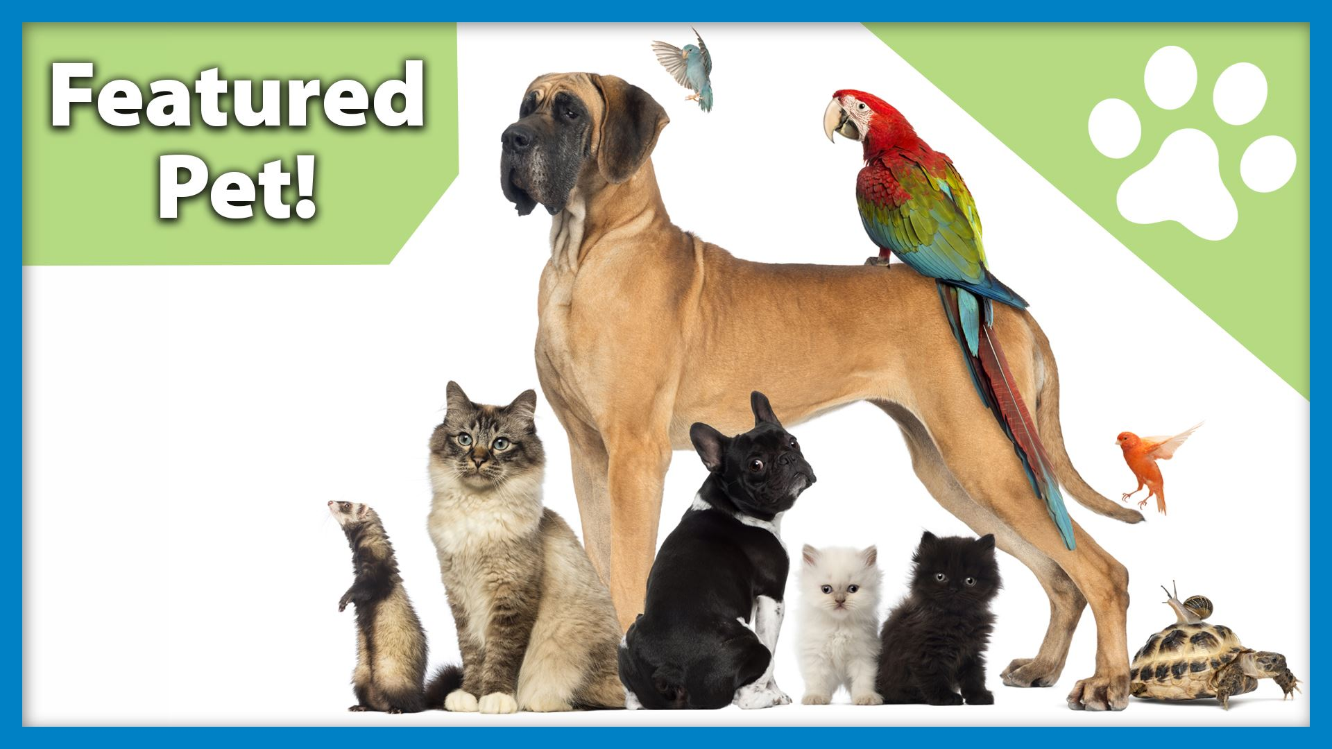 Pet of the Week graphic